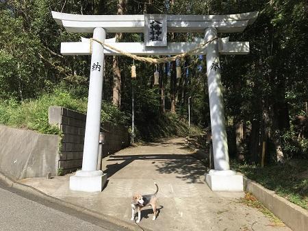 20191013椎崎八幡神社01