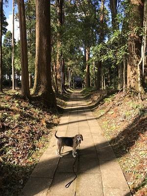 20191013椎崎八幡神社09