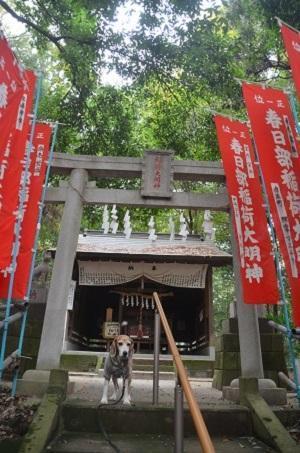 20191103春日部稲荷神社09