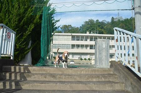 20191107強瀬小学校01