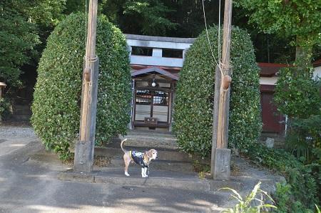 20191108三島神社01