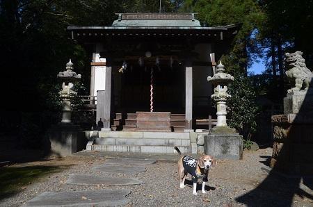 20191108浅間神社12