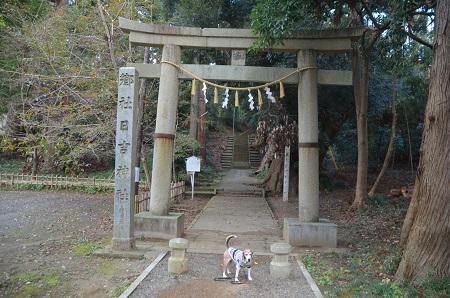 20191111東金日吉神社02