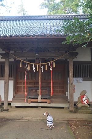 20191111東金日吉神社12