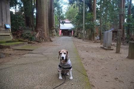 20191111東金日吉神社09