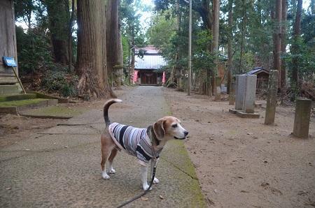 20191111東金日吉神社08
