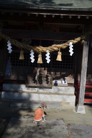 20191116羽梨山神社10