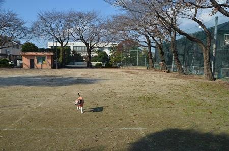 20191116旧・友部小学校跡03