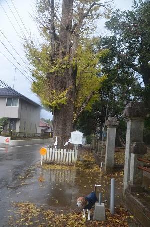 20191202松之郷八坂神社03