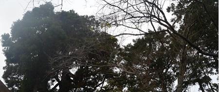 20191206松山神社04