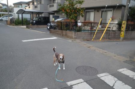 20191224うるし坂06