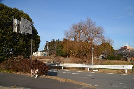 20200125水戸八景 青柳夜雨02