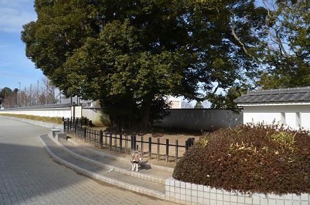 20200125水戸城址40