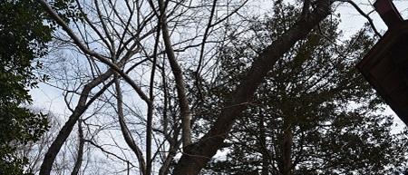 20200210鹿島神社23