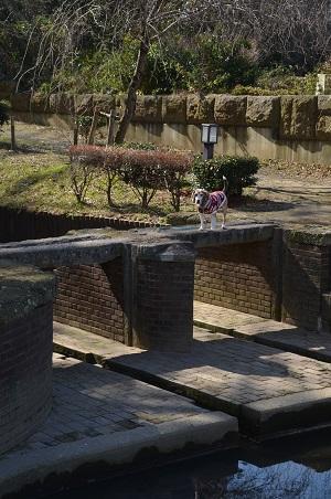 20200210江連用水旧溝宮11