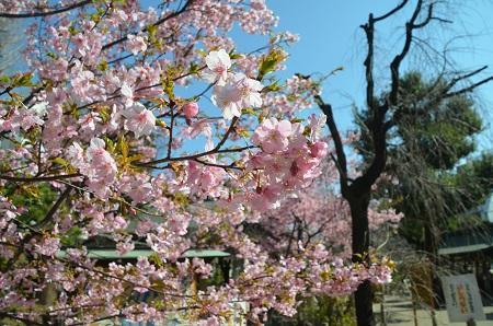 20200221鳩森八幡神社37