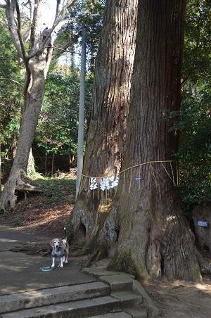 20200301東金日吉神社04