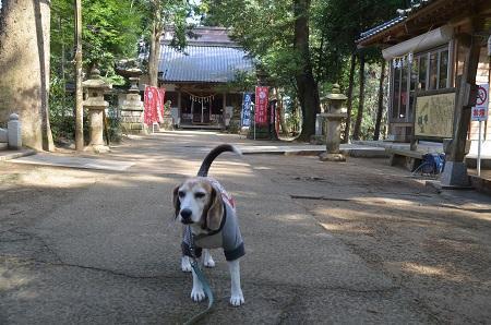 20200301東金日吉神社09