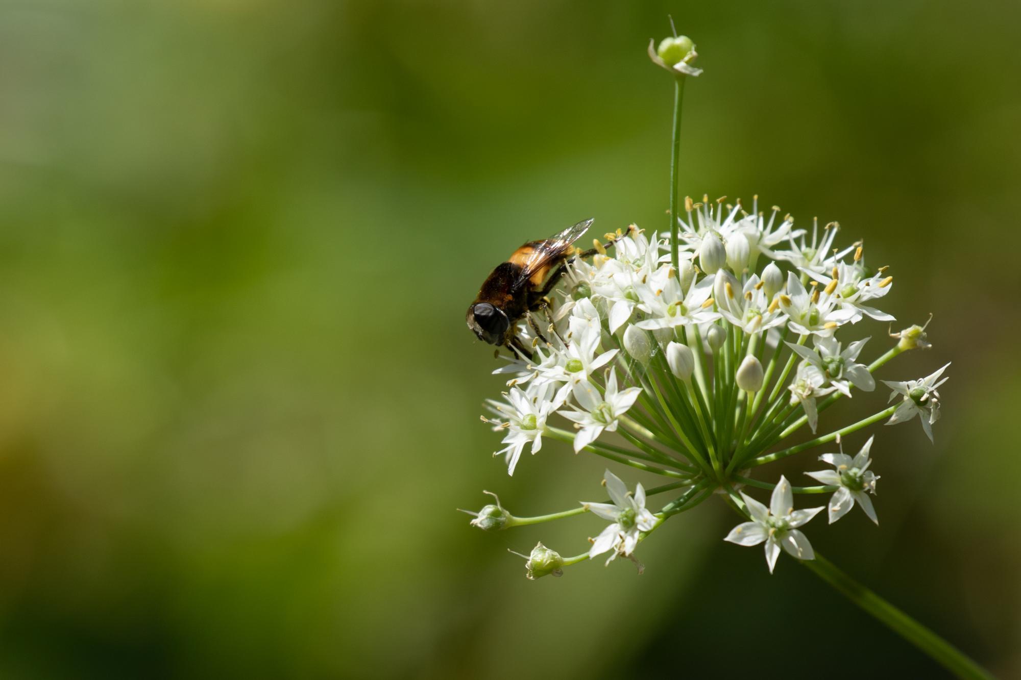 20190919-野花と虫1