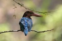 birder175