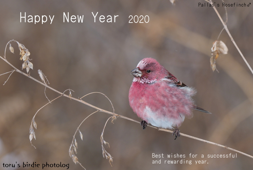 P1162661f32hanten-年賀2020英語blog880