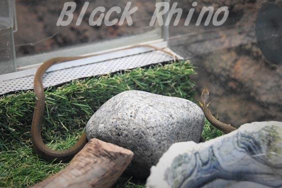ヒバカリ02 いしかわ動物園