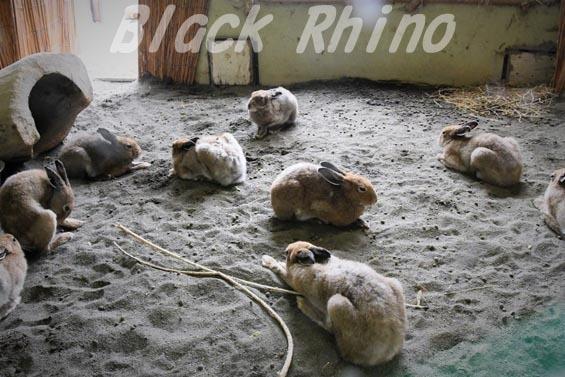 エゾユキウサギ04 円山動物園