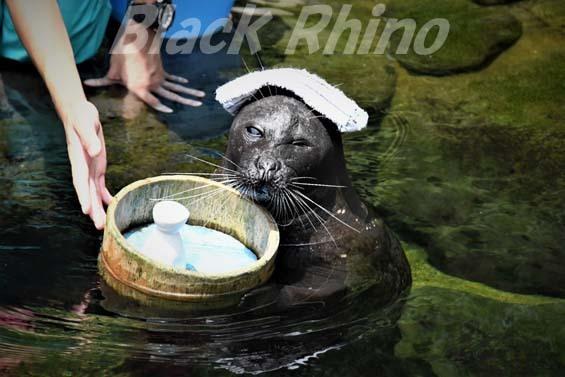 バイカルアザラシ01 箱根園水族館
