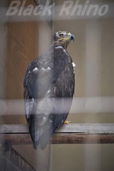 ソウゲンワシ01 姫路市立動物園