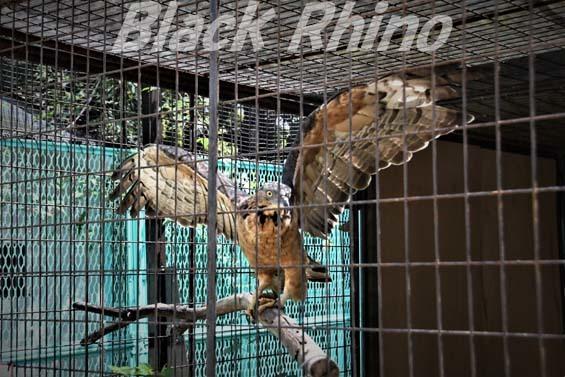 ハチクマ03 姫路市立動物園