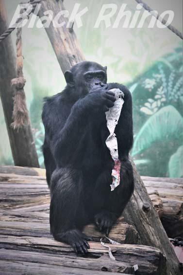 ヒガシチンパンジー パピー03 伊豆シャボテン公園
