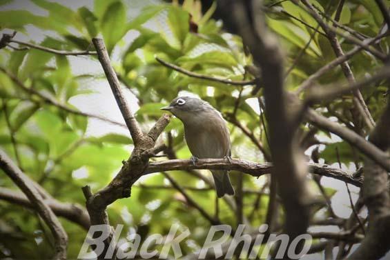 メジロ01 豊橋総合動植物公園
