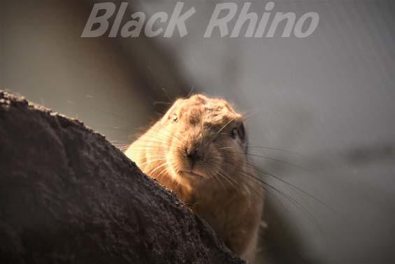 グンディ07 埼玉県こども動物自然公園