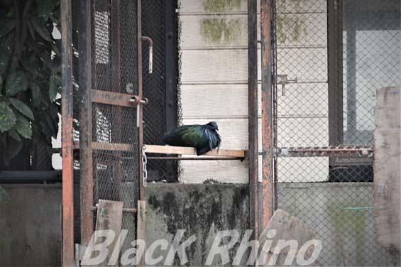 ミノバト01 福岡市動物園