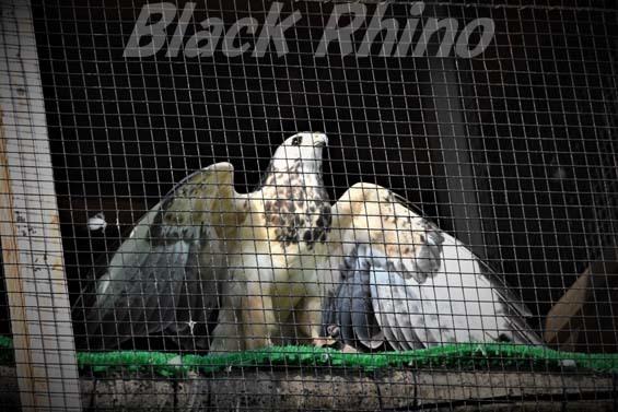 ヨーロッパノスリ01 大内山動物園