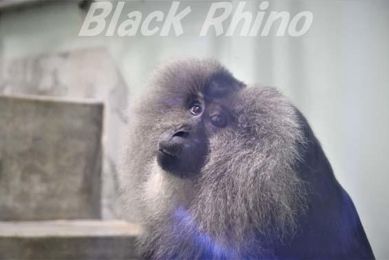 シシオザル01 福岡市動物園