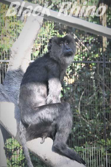 シシオザル02 福岡市動物園