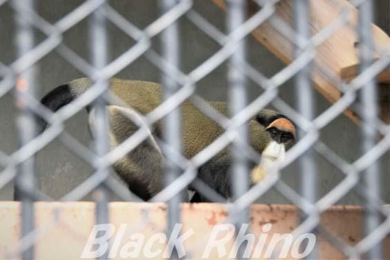 ブラッザグェノン01 福岡市動物園