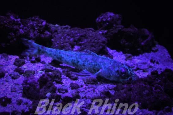 エソダマシ01 美ら海水族館