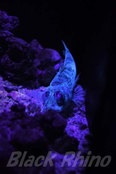 エソダマシ02 美ら海水族館