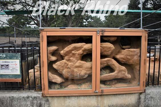 オグロプレーリードッグ03 海の中道海浜公園動物の森