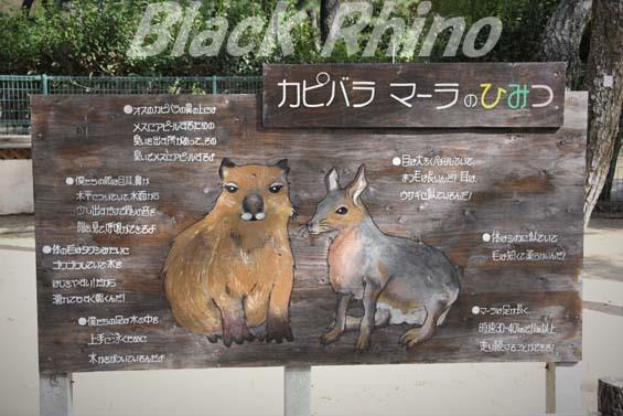 マーラ02 海の中道海浜公園動物の森