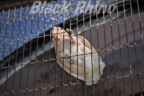 シロビタイジオウム02 福岡市動物園
