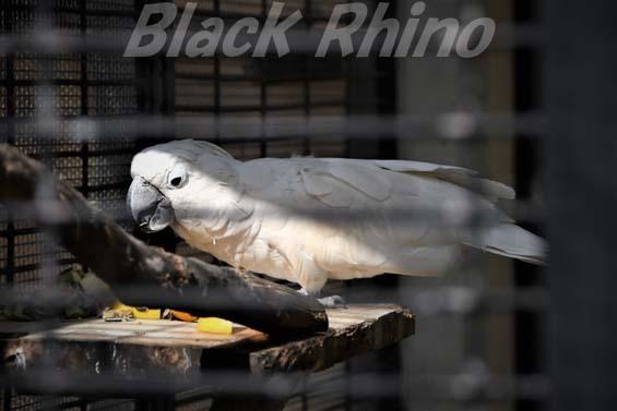 タイハクオウム01 福岡市動物園