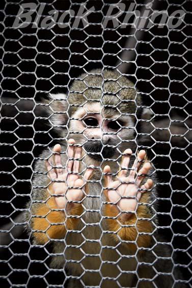 コモンリスザル01 大内山動物園