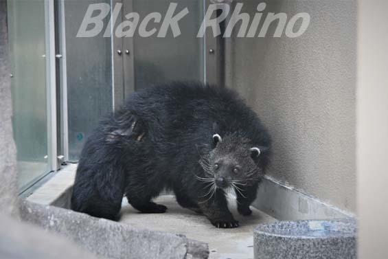 ビントロング01 福岡市動物園
