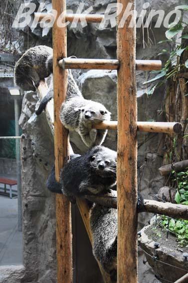 ビントロング01 高知県立のいち動物公園