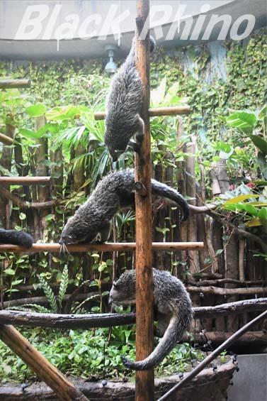 ビントロング02 高知県立のいち動物公園