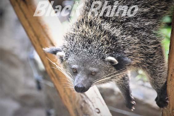 ビントロング03 高知県立のいち動物公園
