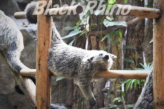 ビントロング04 高知県立のいち動物公園
